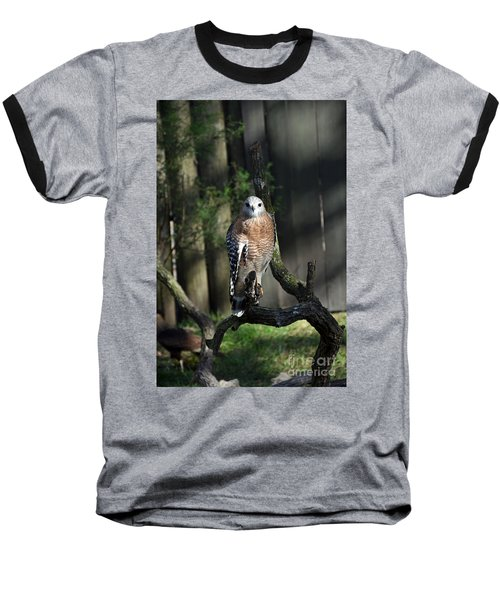 Red Shouldered-hawk Baseball T-Shirt