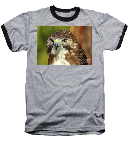 Red Tailed Hawk Baseball T-Shirt