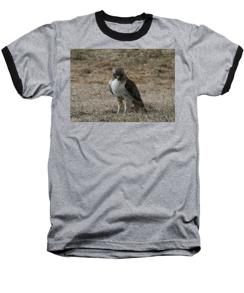 Red Tailed Hawk Baseball T-Shirt by Neal Eslinger