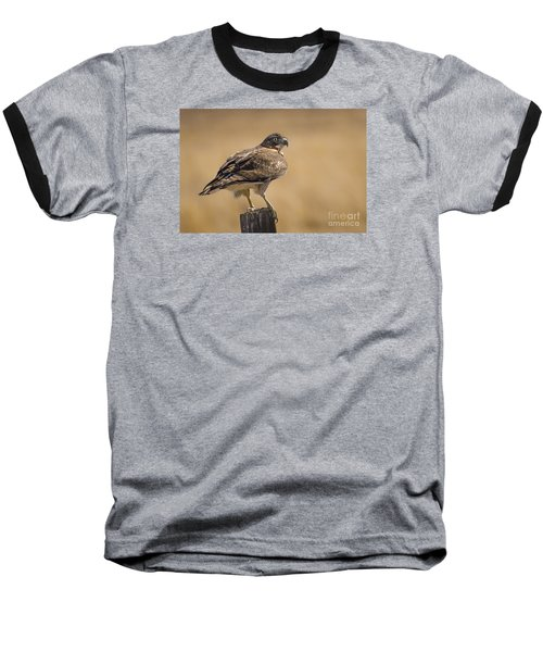 Red Tailed Hawk Watching Baseball T-Shirt by Janis Knight