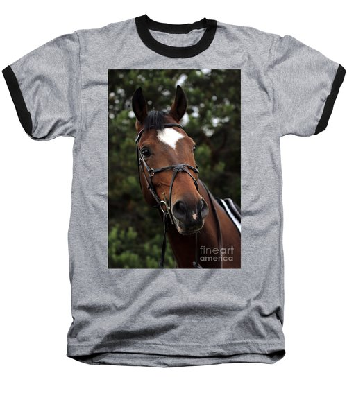 Regal Horse Baseball T-Shirt