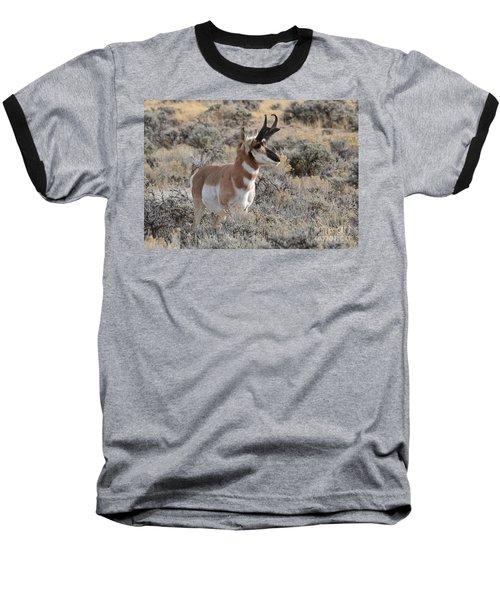 Regal Patriarch Baseball T-Shirt