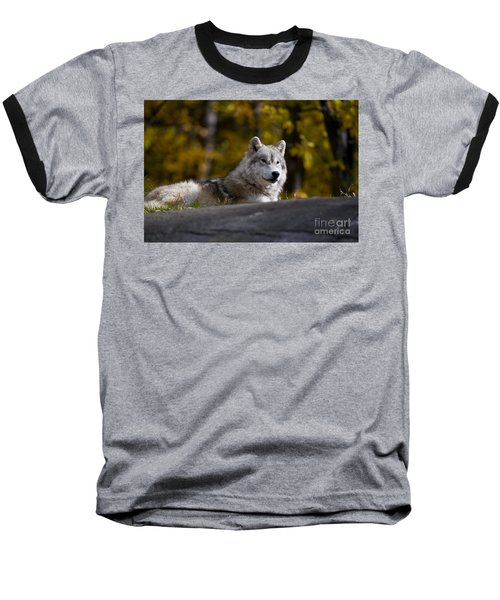 Baseball T-Shirt featuring the photograph Resting Arctic Wolf On Rocks by Wolves Only
