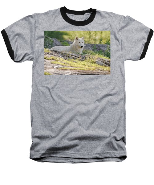 Baseball T-Shirt featuring the photograph Resting Arctic Wolf by Wolves Only