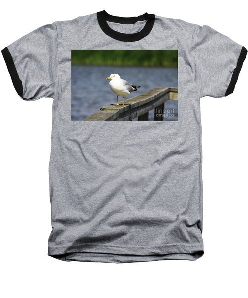 Ring-billed Gull Baseball T-Shirt by Alyce Taylor