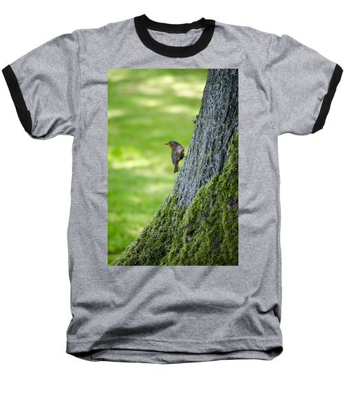 Robin At Rest Baseball T-Shirt by Spikey Mouse Photography