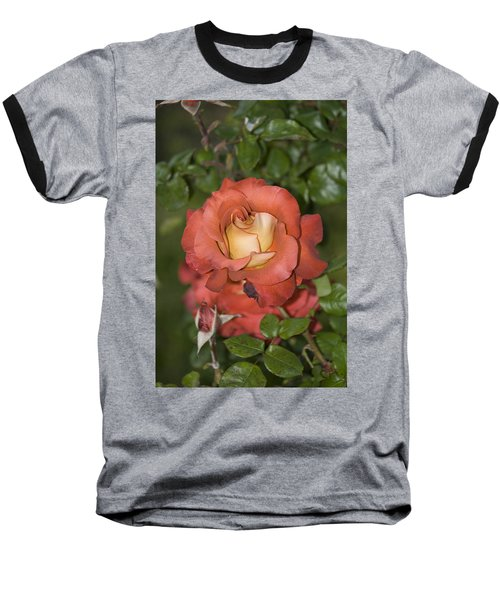 Rose 6 Baseball T-Shirt