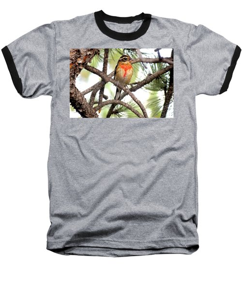 Rose-breasted Grosbeak Baseball T-Shirt by Marilyn Burton