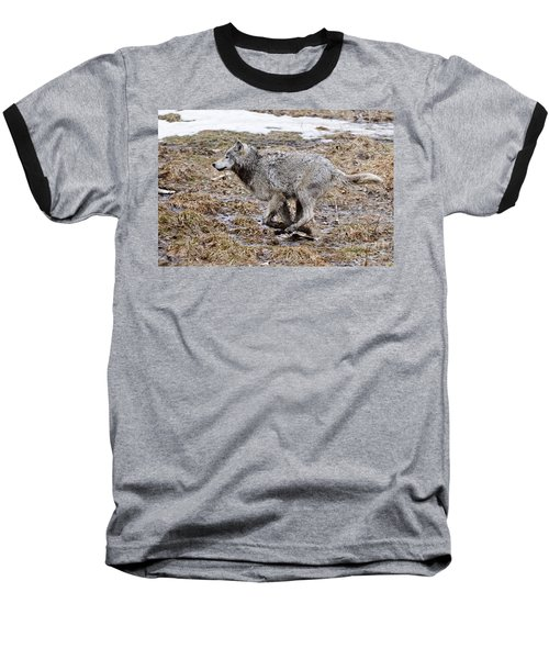 Baseball T-Shirt featuring the photograph Running Timber Wolf by Wolves Only