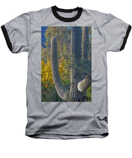 Saguaro Fall Color Baseball T-Shirt by Tam Ryan