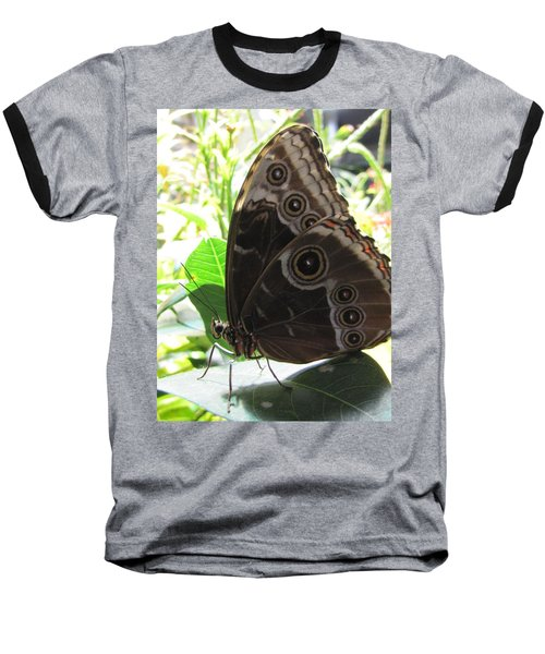 Scarce Morpho Baseball T-Shirt