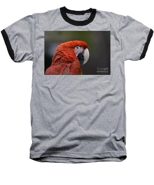 Scarlet Macaw Baseball T-Shirt by David Millenheft