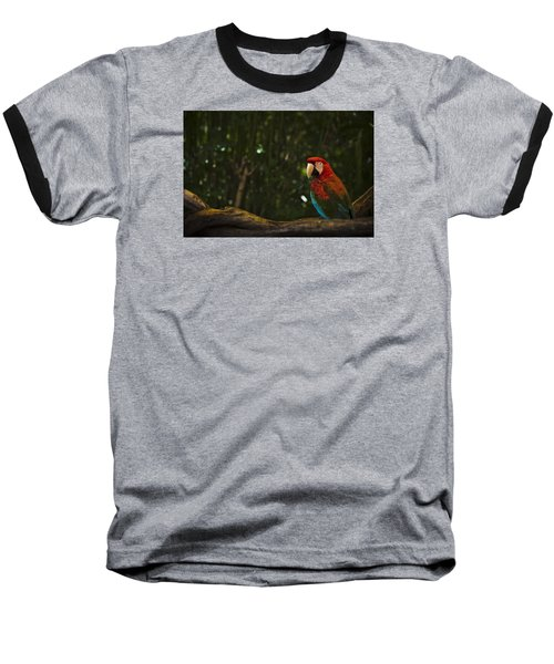Scarlet Macaw Profile Baseball T-Shirt by Bradley R Youngberg