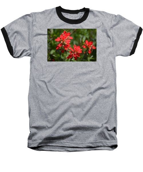 Scarlet Paintbrush. Texas Wildflowers. Castilleja_indivisa Baseball T-Shirt by Connie Fox