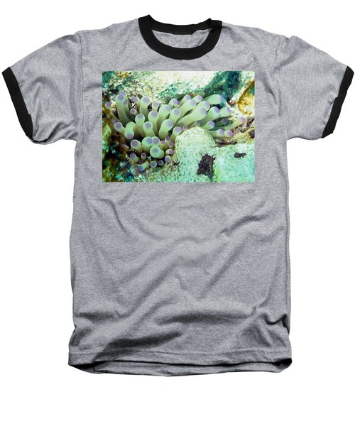 Baseball T-Shirt featuring the photograph Sea Anemone With Squat Anemone Shrimp Family by Amy McDaniel