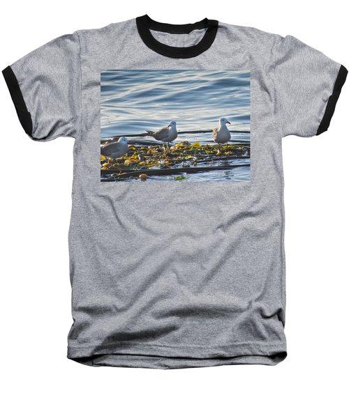 Seagulls In Victoria Bc Baseball T-Shirt