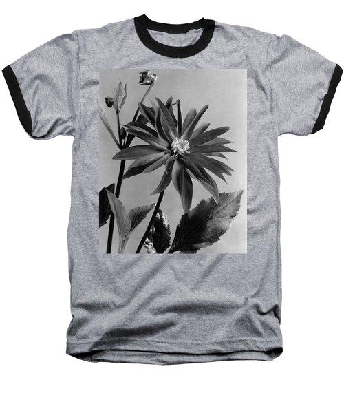 Semi-double Dwarf Pigmy Dahlia Flower Baseball T-Shirt