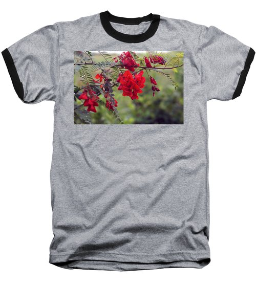 Sesbania Punicea Baseball T-Shirt by Kim Pate