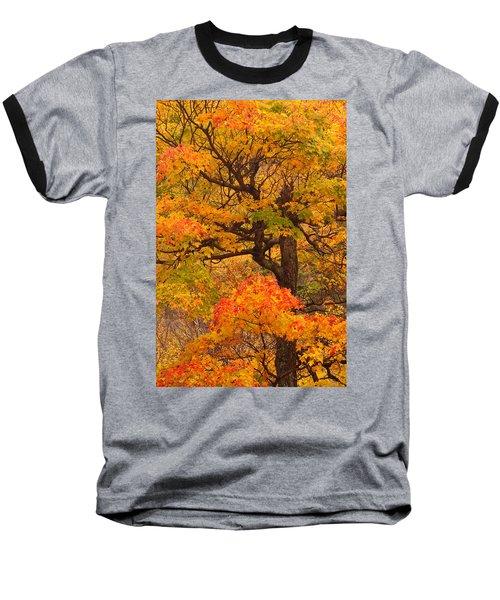 Shapely Maple Tree Baseball T-Shirt