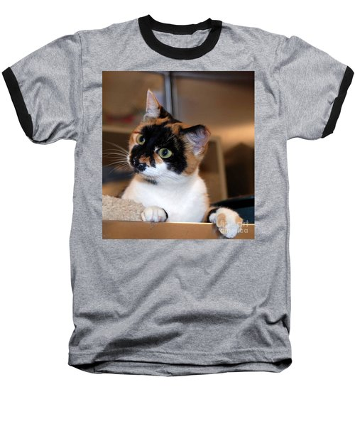 Shelter Cats Are The Best Baseball T-Shirt