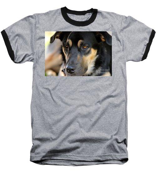 Shepherd Face Baseball T-Shirt