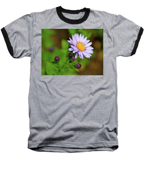 Showy Aster Baseball T-Shirt by Ed  Riche