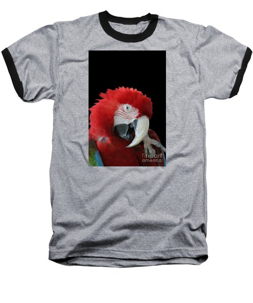 Shy Macaw Baseball T-Shirt by Judy Whitton