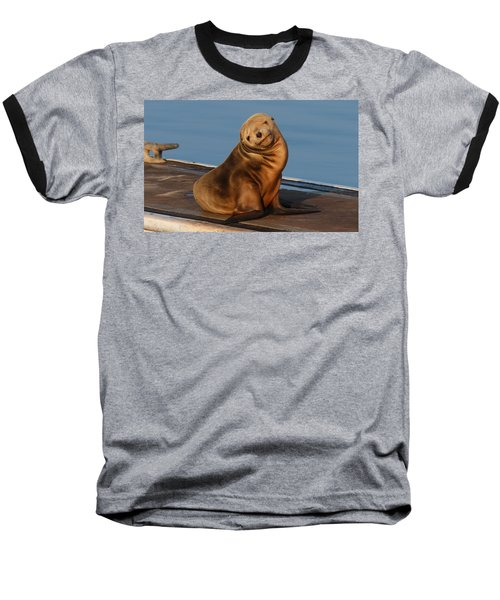 Shy Sea Lion Pup  Baseball T-Shirt