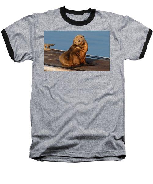 Shy Sea Lion Pup  Baseball T-Shirt
