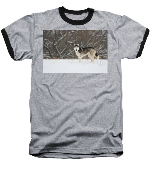 Siberian Husky 20 Baseball T-Shirt by David Dunham