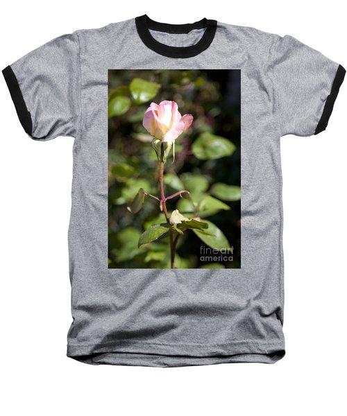 Single Rose Baseball T-Shirt by David Millenheft