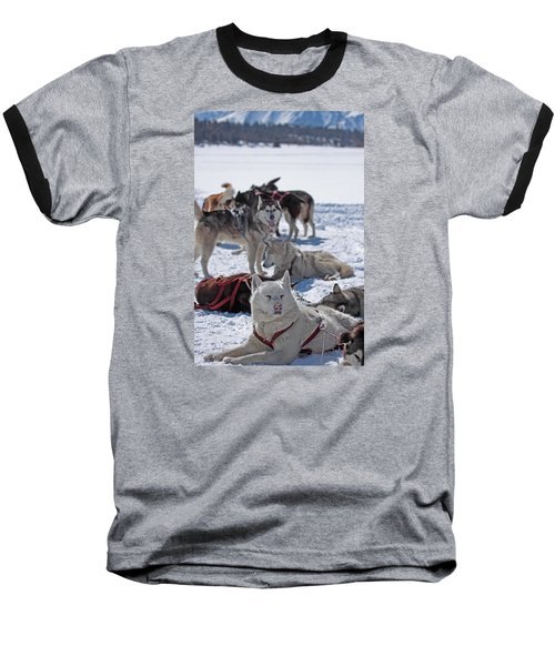 Sled Dogs Baseball T-Shirt by Duncan Selby