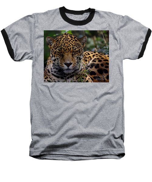 Sleeping Jaguar Baseball T-Shirt by Liz Masoner