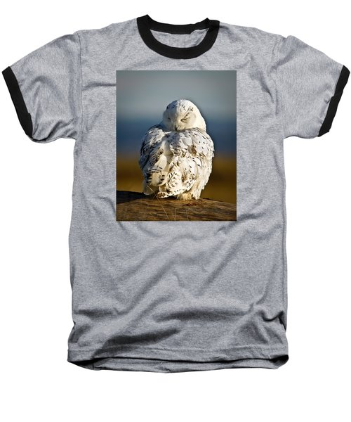 Sleeping Snowy Owl Baseball T-Shirt by Steve McKinzie