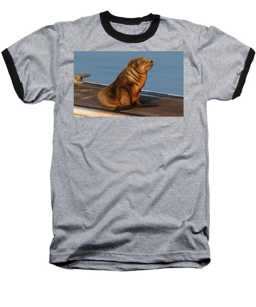 Sleeping Wild Sea Lion Pup  Baseball T-Shirt