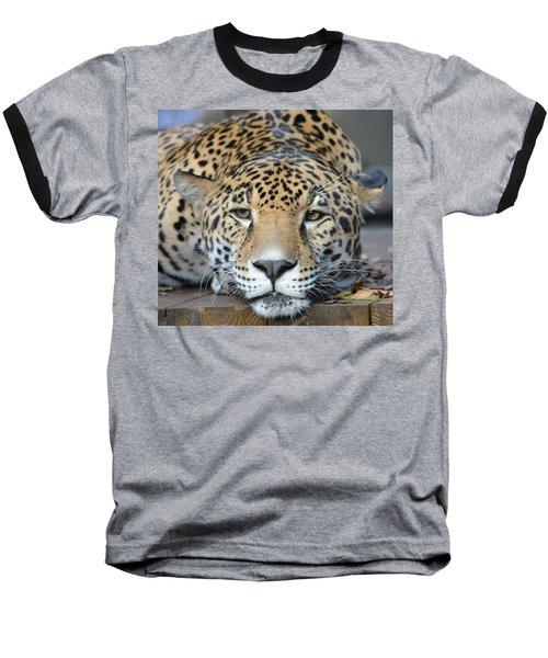 Sleepy Jaguar Baseball T-Shirt by Richard Bryce and Family