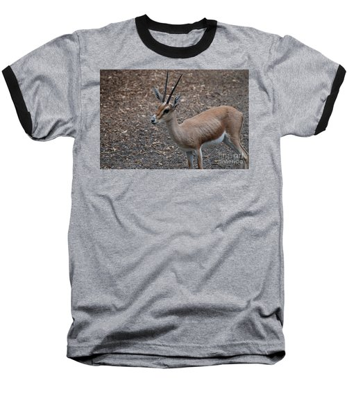 Slender Horned Gazelle Baseball T-Shirt by DejaVu Designs