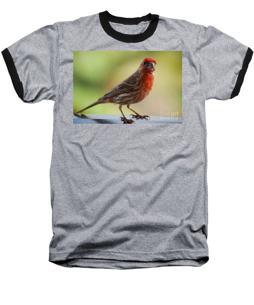 Small Brown And Red Bird Baseball T-Shirt by DejaVu Designs