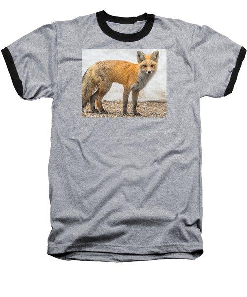 Smart Like A Fox Baseball T-Shirt by Yeates Photography