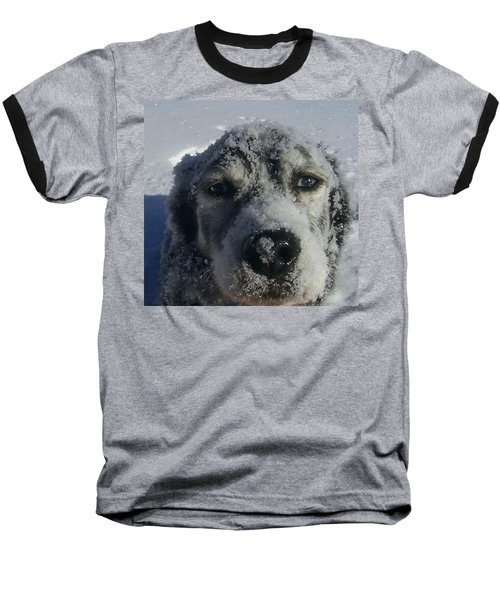 Snow Dog Baseball T-Shirt