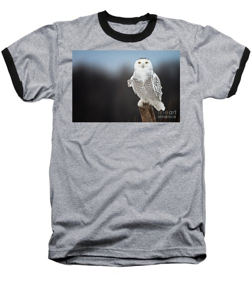 Snowy Owl Pictures 13 Baseball T-Shirt