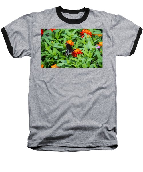 Spicebush Swallowtail Baseball T-Shirt by Angela DeFrias