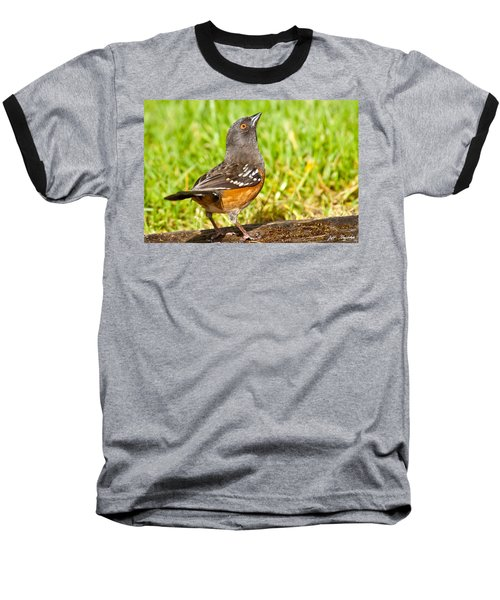Spotted Towhee Looking Up Baseball T-Shirt