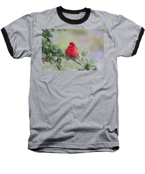 Spring Beauty Baseball T-Shirt
