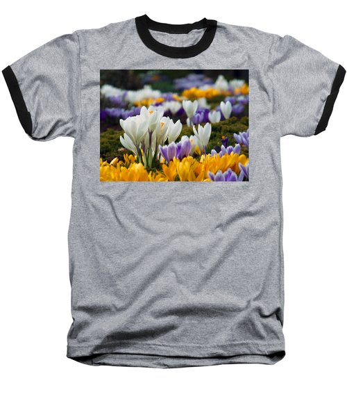 Spring Crocus Baseball T-Shirt by Dianne Cowen