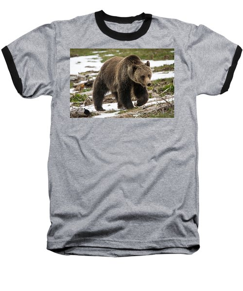 Baseball T-Shirt featuring the photograph Spring Grizzly Bear by Jack Bell
