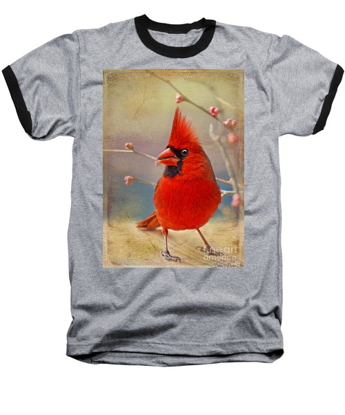 Spring Male Norther Cardinal Baseball T-Shirt
