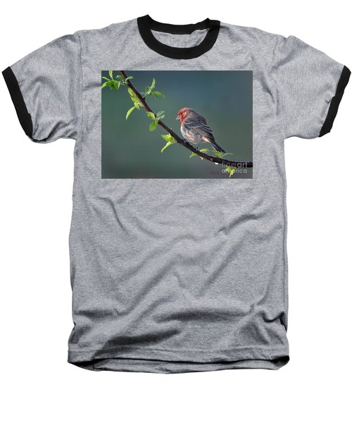 Song Bird In Spring Baseball T-Shirt by Nava Thompson