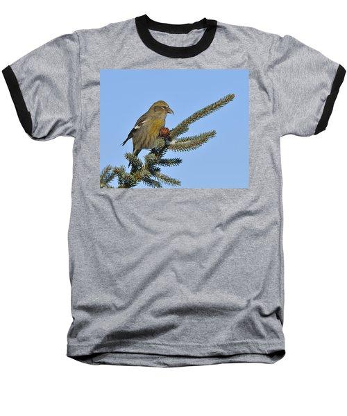Spruce Cone Feeder Baseball T-Shirt by Tony Beck