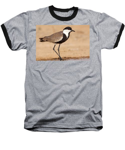 Spur-winged Lapwing Vanellus Spinosus Baseball T-Shirt by Eyal Bartov